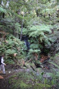 Lake Waikaremoana (231)_1