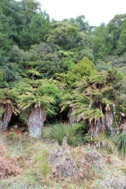 Lake Waikaremoana (292)_1