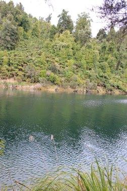 Lake Waikaremoana (301)_1