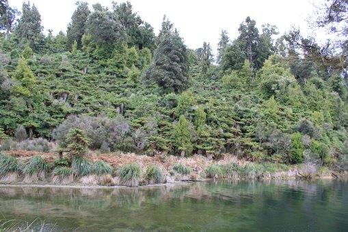 Lake Waikaremoana (305)_1