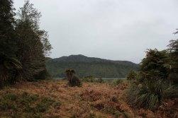 Lake Waikaremoana (324)_1