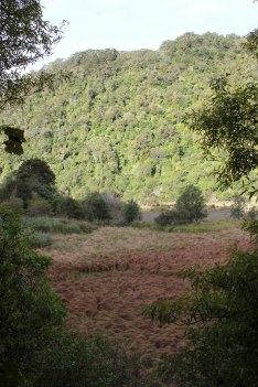 Lake Waikaremoana (358)_1