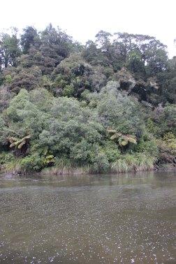 Lake Waikaremoana (36)_1