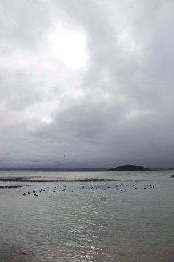 Rotorua (111)_1