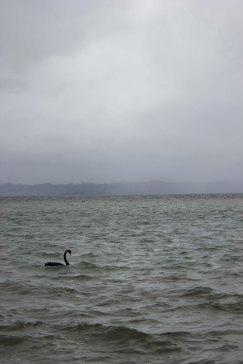 Rotorua (143)_1
