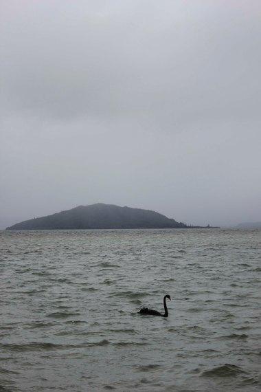 Rotorua (149)_1
