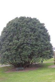 Rotorua (181)_1