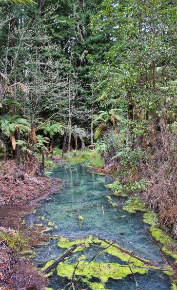 Rotorua (480)_1_1