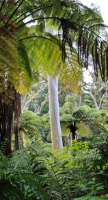 Rotorua (509)_1_1