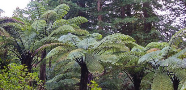 Rotorua (528)_1_1