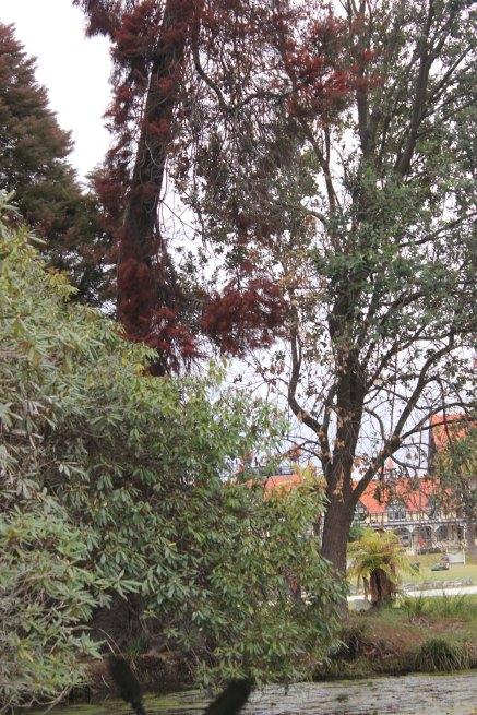 Rotorua (56)_1
