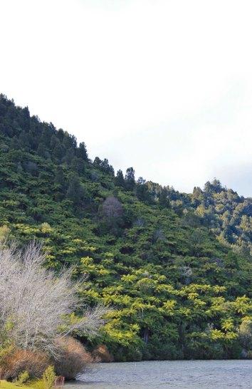 Rotorua (593)_1_1