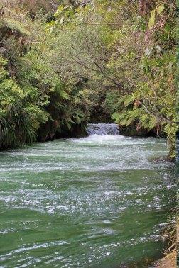 Rotorua (633)_1_1