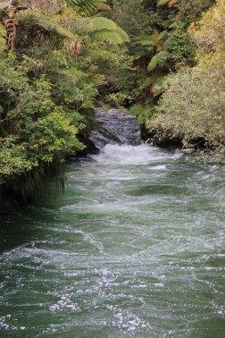 Rotorua (643)_1_1