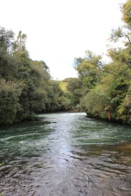 Rotorua (654)_1