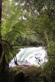 Rotorua (656)_1