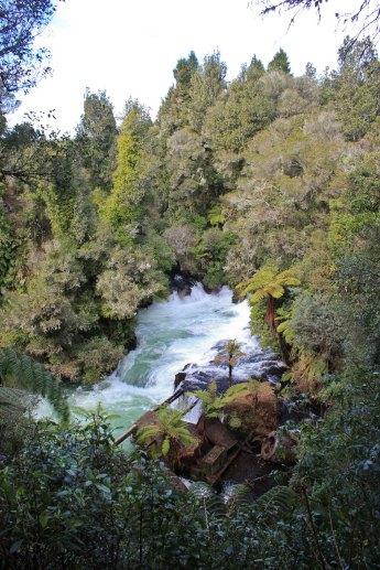 Rotorua (665)_1_1