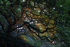 gardenmagic (13)