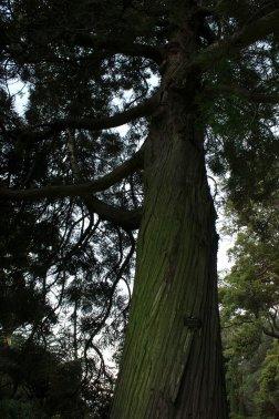 gardenmagic (2)