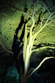 gardenmagic (35)