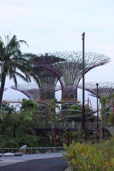 singapour (109)_1