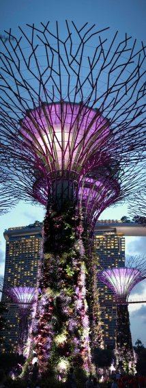 singapour (133)_1