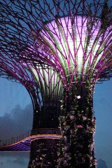 singapour (144)_1