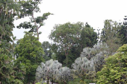 singapour (250)_1