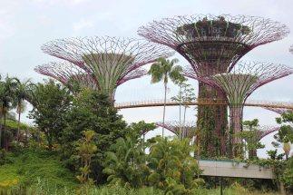 singapour (57)_1